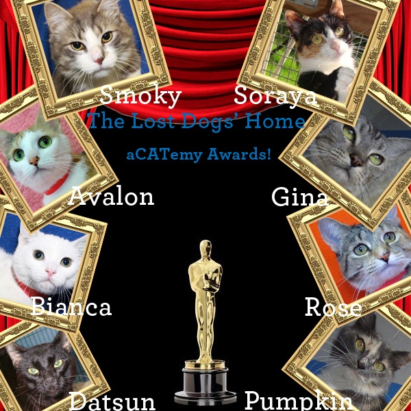 To celebrate our fantastic felines and all their quirks, we are giving our supporters the chance the vote on who they think should take home the 1st ever aCATemy award. To vote, simply 'Like' our Facebook page (http://www.facebook.com/LostDogsHome) and leave a comment nominating which puddy cat you think deserves the crowning glory.  Read the full story at: http://dogshome.com/2012-acatemy-awards