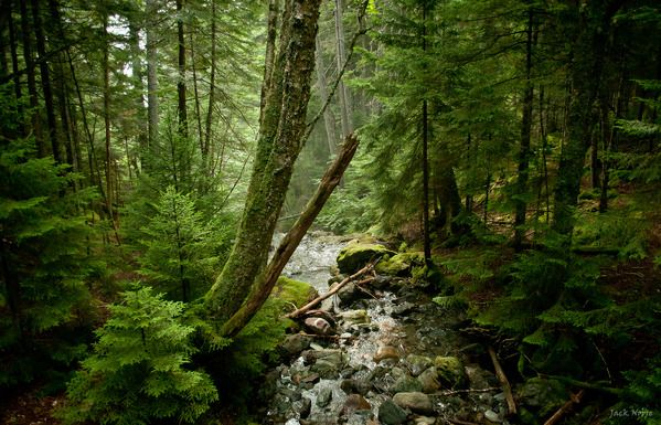 Magic Forest by Jack Nobre. Bay of Fundy National Park, New Brunswick in beautiful Canada!