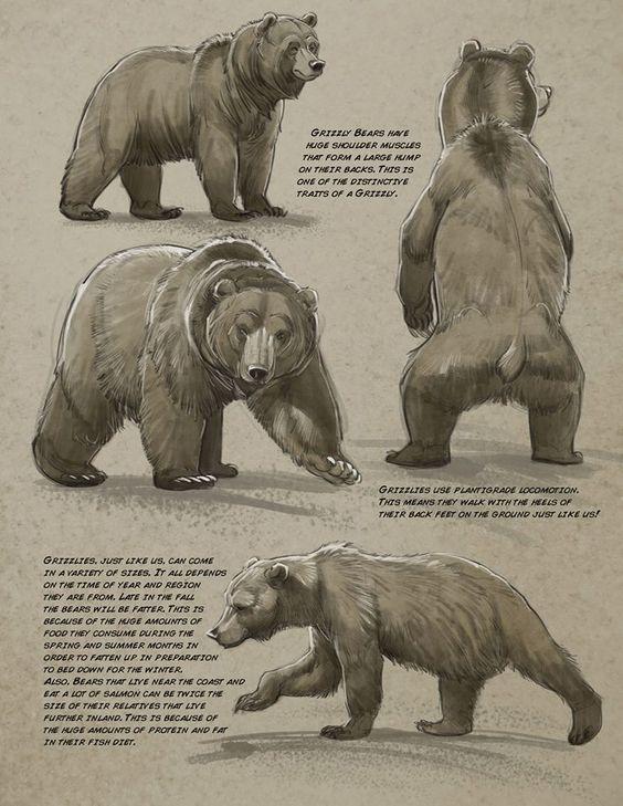 Art tutorials for all — anatoref: Bear by Aaron Blaise  – Baer