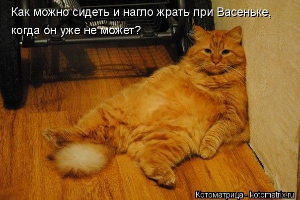 Котоматрица: Как можно сидеть и нагло жрать при Васеньке,  когда он уже не может?