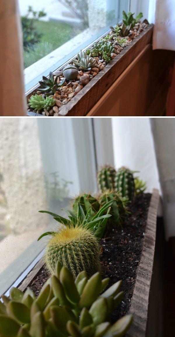 Windowsill succulent garden - Cute DIY Window Decorating Ways Sure To Amaze You