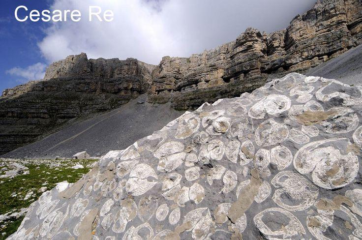 Fossil (megalodon) under Pietra Grande group, Madonna di Campiglio, Adamello Brenta Park, Trento province, Trentino, Italy. Photo by Cesare Re on 500px.