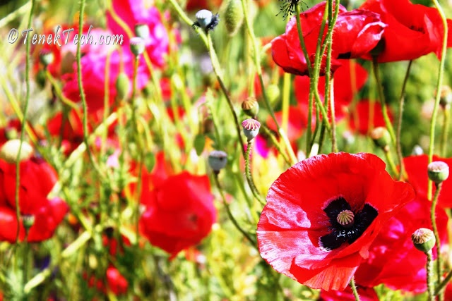 Canada Remembers - A Remembrance Day Story - Death on one Kitsilano block