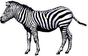 Zebra puzzle - Rosetta Code