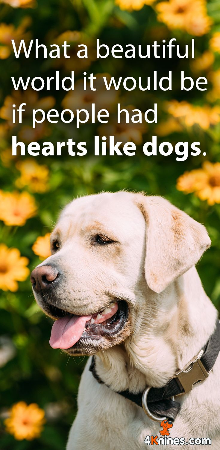 It Would Be A Beautiful World Dogs Dog Quotes Dog Lovers