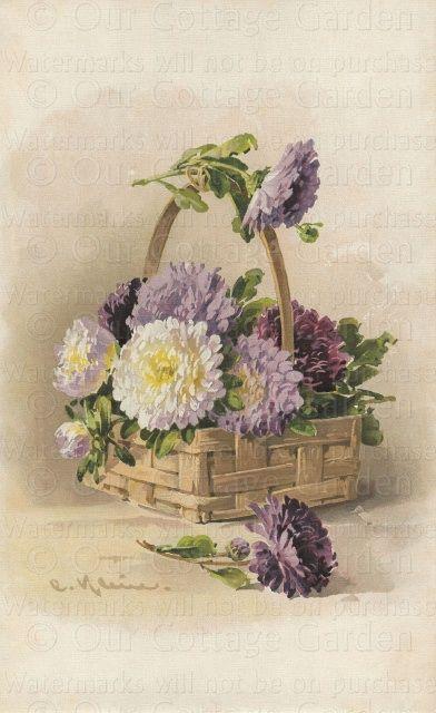 'Lavender Mums' by artist Catherine Klein ~~<>~~ (purple, color, artwork)