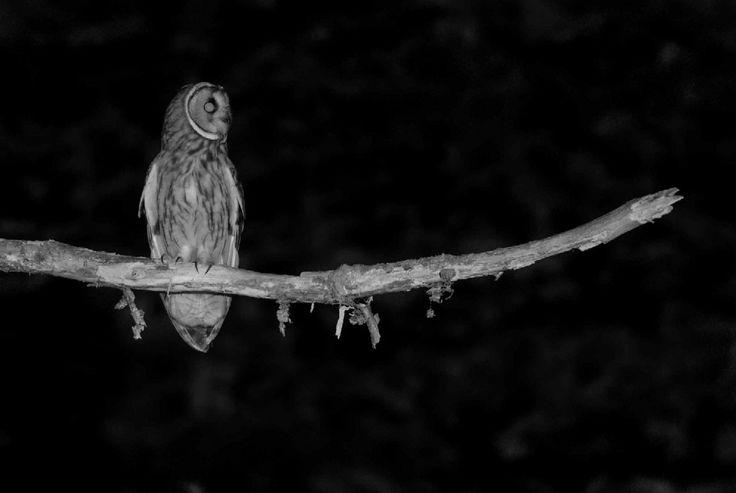 Volpi, gufi, pipistrelli, linci e orsi. Sono gli animali immortalati negli scatti notturni realizzati dal fotografo francese Eric Médard. ''E' la notte che la vera fauna selvatica viene fuori, molti animali sono notturni perché facili prede durante il giorno'', spiega in un'intervista