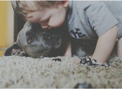 Perro Pitbull negro con un niño pequeño