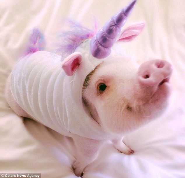Another outfit: The animal also owns this well-fitted unicorn suit