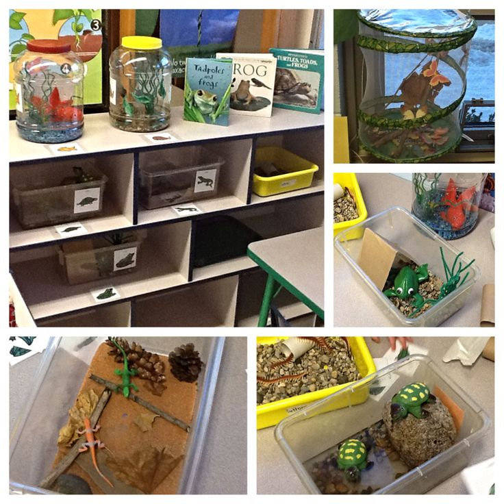 Revamping the science center in my classroom! Have different types of bugs/insects/animals for students to look at close up, recreate their habitats, and redraw with colored pencils and paper...   And of course, lots of labels for my preschool kiddos!