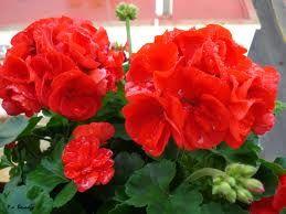 The 25 best plantas ornamentales ideas on pinterest for Plantas ornamentales de interior