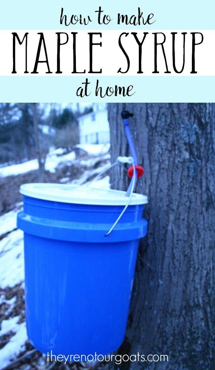 How to make maple syrup at home with a minimum of supplies.