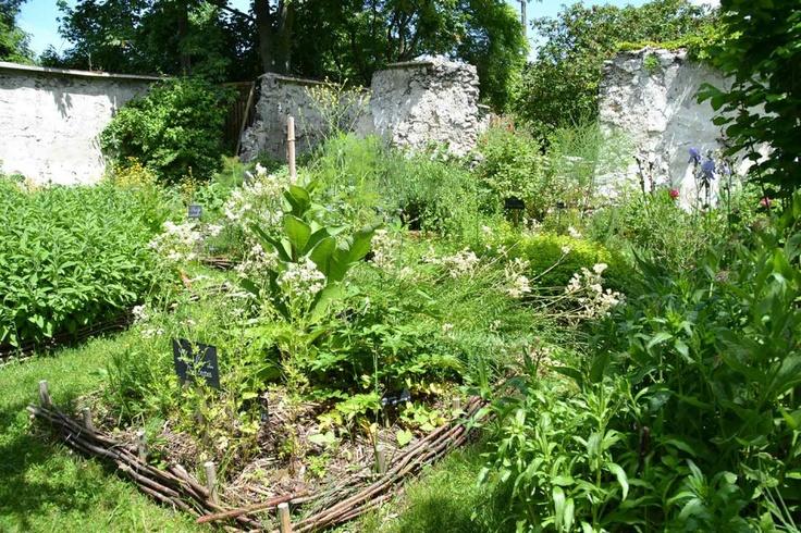 jardin-medieval-murs-a-peches-montreuil-radis-rose  Les murs à pêches de Montreuil  18 juin 2013 http://mursapeches.wordpress.com