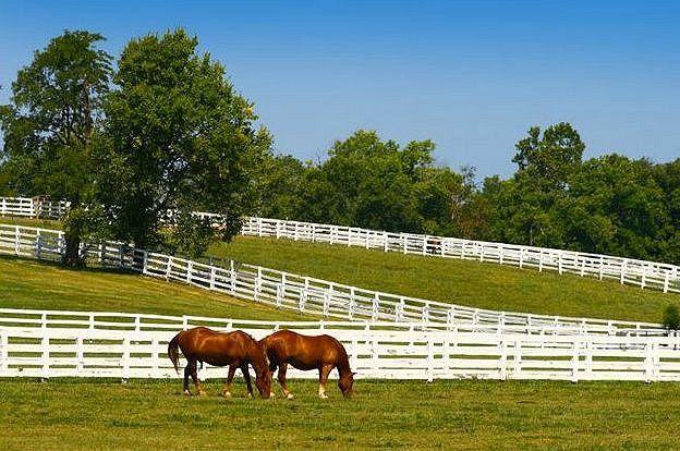 You Can Tour Horse Farms In Ocala Marion County Florida