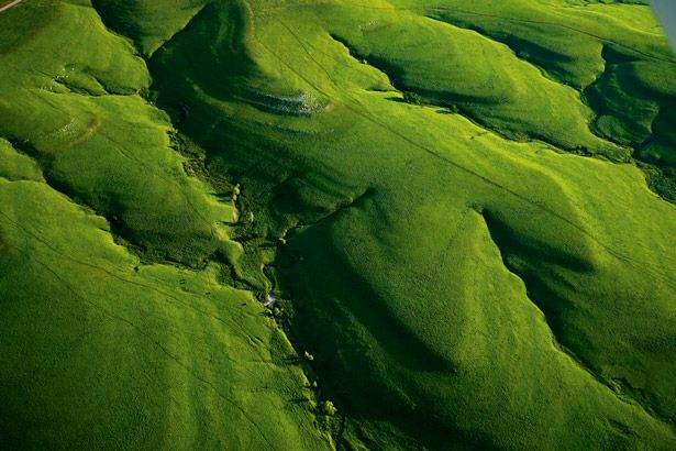 In the Flint Hills of Kansas, the nation's last great expanse of tallgrass prairie.