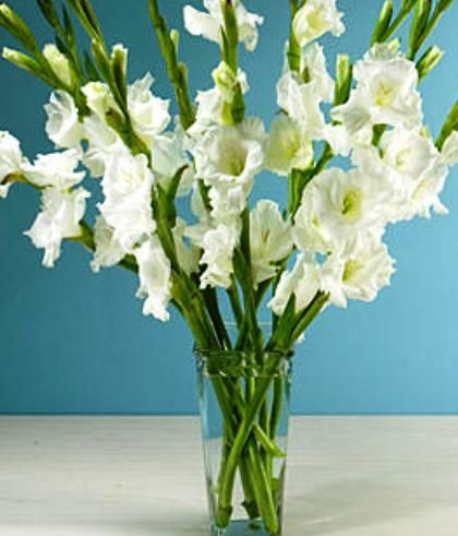 20 Stem White Gladiolus Bouquet