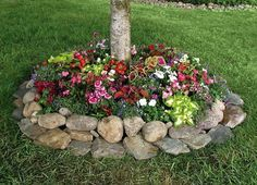 Tree Base Flower Bed with Rocks