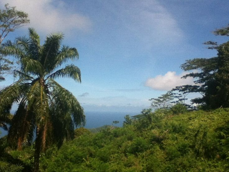 View from the bus at the top of he Island in the Seychelles x