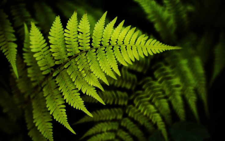 Eukarya Plants
