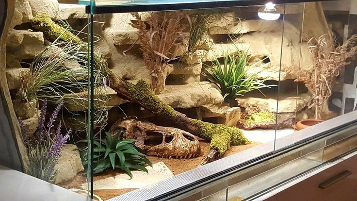Came across this tank set up in a Leopard Gecko group. Don't know who made it, but I think it's gorgeous!