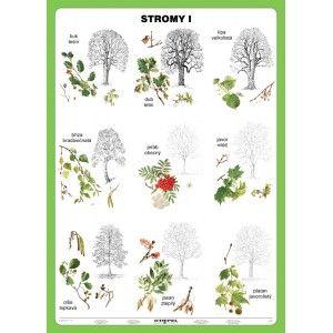 Stromy I.