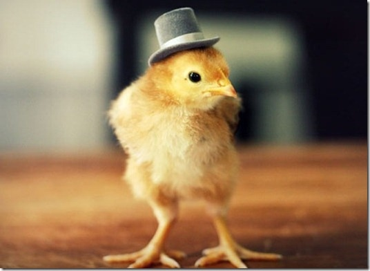 Top hat wearing chick!
