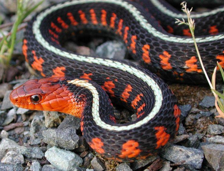 названия змей с фотографиями