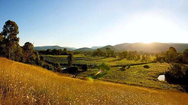 Dal Zotto's King Valley Vineyards. SMH.