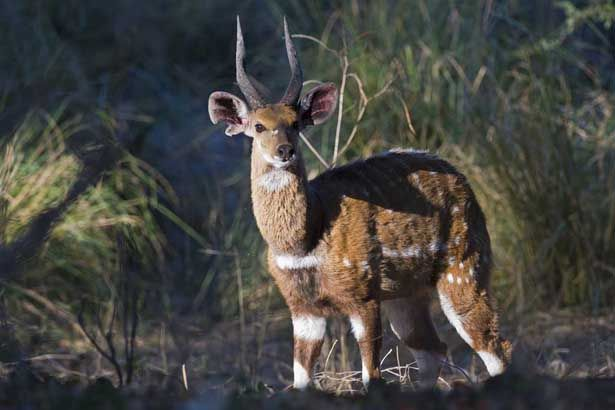 Discover the Lure of Winter at Toka Leya #bushbuck #Zambia