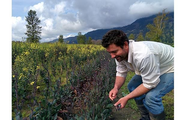 Foreigners can buy as much B.C. farmland as they want —and they are