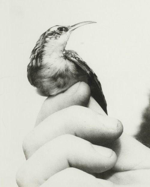 Vogel in der Hand by Jochen Lempert, 1998: Gartenbaumläufer