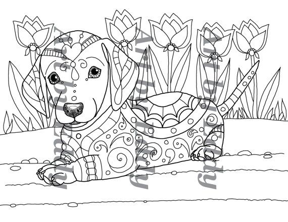 Dachshund coloring pages adult sketch coloring page for Weiner dog coloring pages