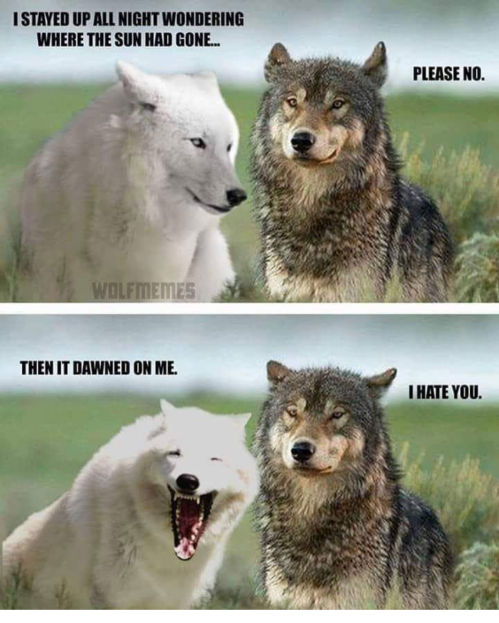 Top 38 Fresh Funny Animal Photos That Are Absolutely Hilarious