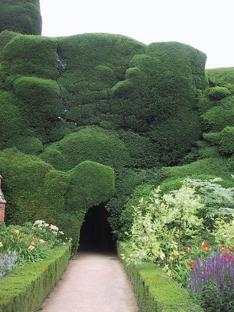 A stunning piece of yew topiary undulates above a tunnel at Powis Castle, Welshpool, Wales.