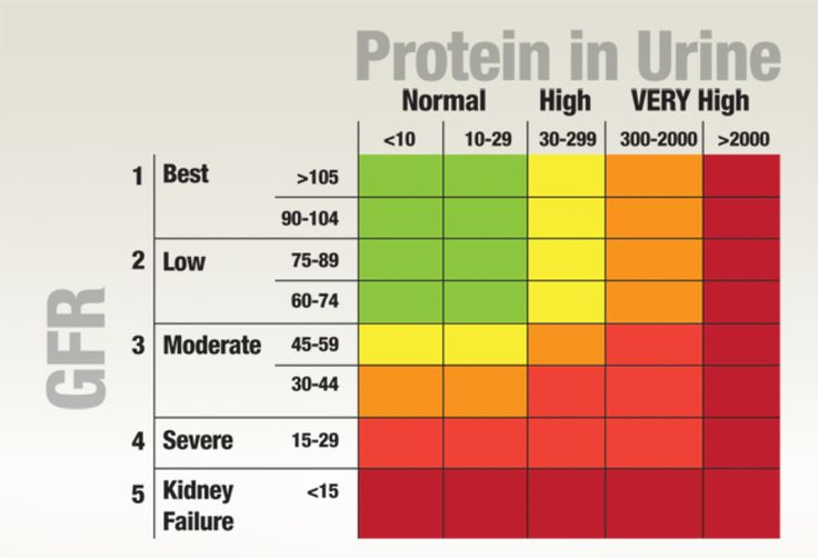 Normal Protein Levels In Urine | Protein in Urine ...