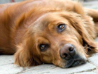 Companion Animal Hospital Blog: Common Pet Problems: Acute Colitis