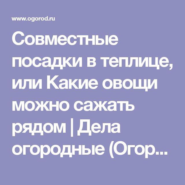 Совместные посадки в теплице, или Какие овощи можно сажать рядом   Дела огородные (Огород.ru)