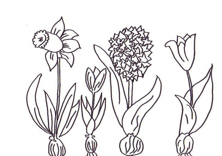malvorlagen frühlingsblumen ausmalbilder 2007653