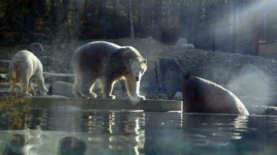 Sesi et Vicks découvrent un espace qui, à terme, sera dix fois plus grand que l'ancien enclos du zoo. Photos Dom Poirier