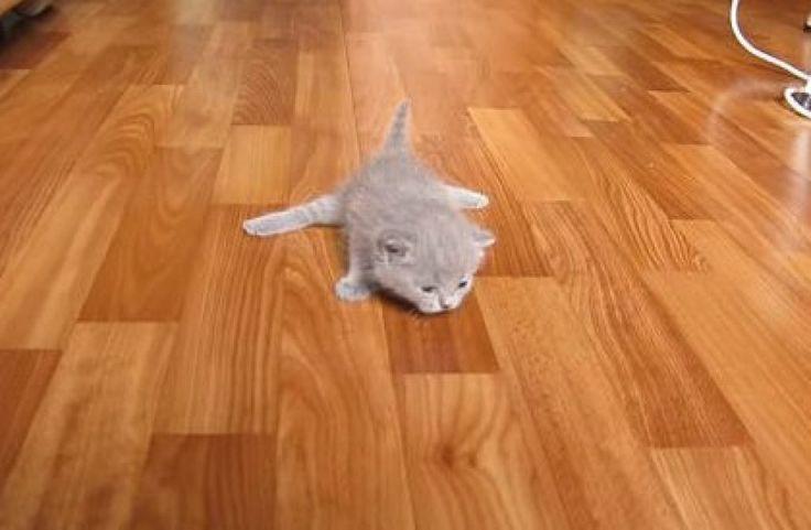 Очаровательные котята делают свои первые шаги  https://zelenodolsk.online/ocharovatelnye-kotyata-delayut-svoi-pervye-shagi/