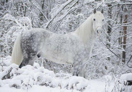 13 schöne Pferde in der wilden Natur