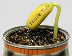 Семена магических бобов http://urozhai.com/?q=magicheskie-boby-10-sht