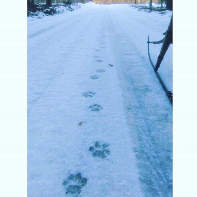 【lottakanon1】さんのInstagramをピンしています。 《#sverige #natur #skog #fotspår #spark #vintage #snö #resa #スウェーデン #自然 #森 #足跡 #ヴィンテージ #雪 #いなか #旅 #スパルク》