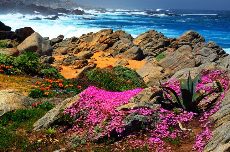 Isla Negra-Chile by sedats.deviantart.com on @deviantART