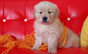 Top 10 Pelajaran Untuk Dipelajari Dari Anjing Peliharaan Anda  Tips - December 21 2016 at 07:57AM