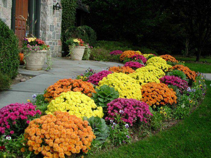 chrysanthemen garten ideen gartenpflanzen herbstpflanzen gartenweg