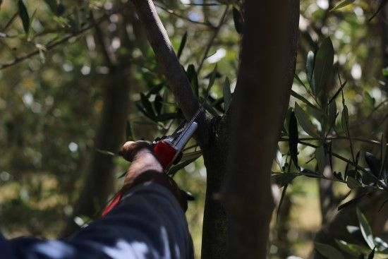At Olive Factory we believe in cost effective farming for the future. Read more about the sustainable methods we implement.