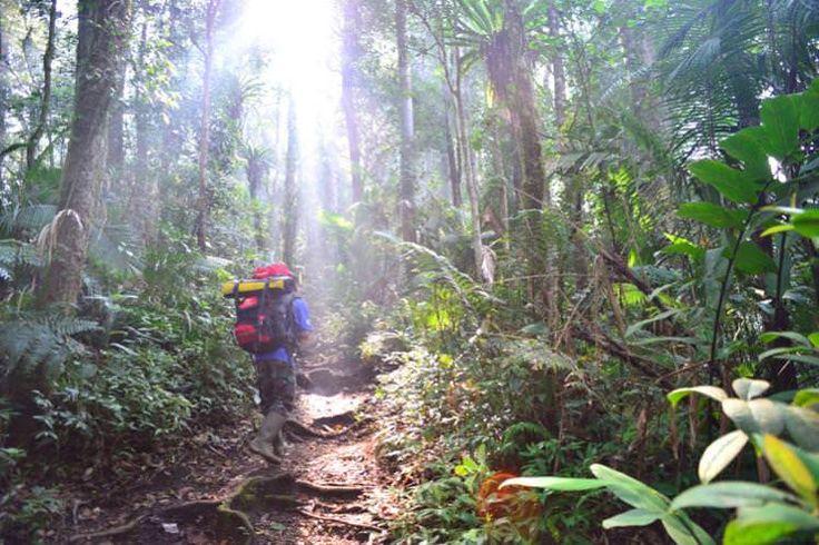 Hiking on the forested slopes of Gunung Tujuh, Kerinci Seblat National Park, Sumatra. Image by Mark Eveleigh