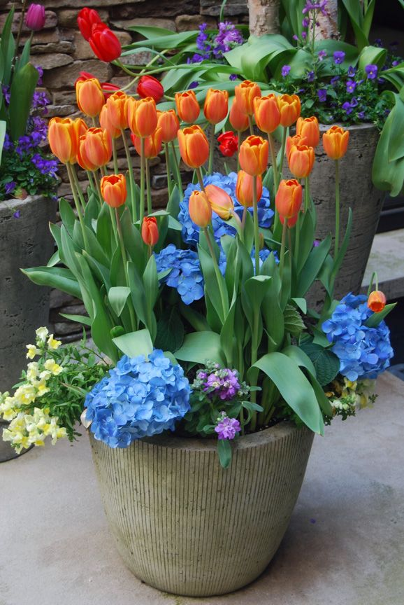 13 best Spring Annuals and ideas images on Pinterest Spring