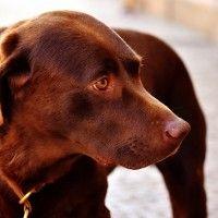 #dogalize Cura del cane diabetico: alimentazione e consigli #dogs #cats #pets